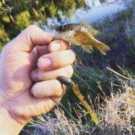 bra fisk