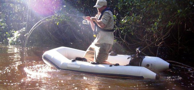 Kubanische Jungle-Tarpons