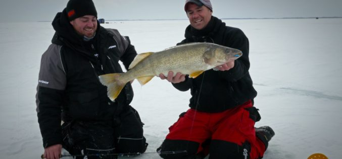 Lake Erie-Walleyes