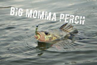 Big Momma Perch