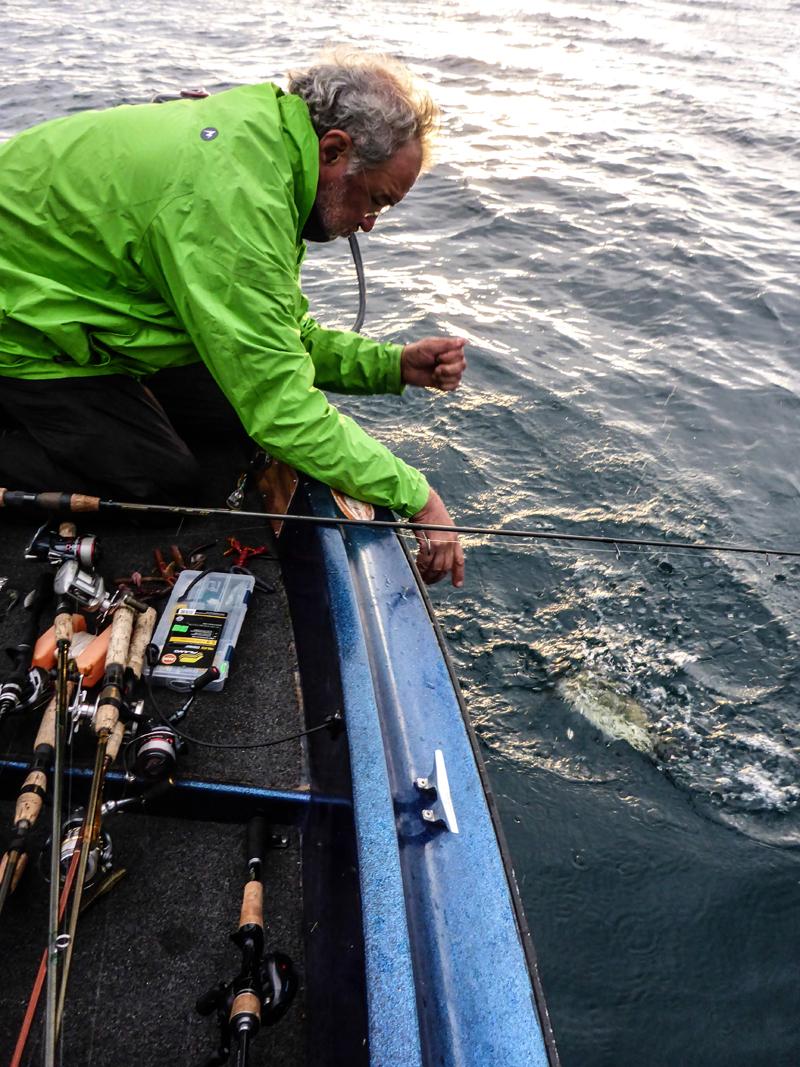 Un Bass sensa Landing Net. Porca meseria!