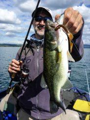 Schöner Bass - gefangen aufs Carolina-Rig