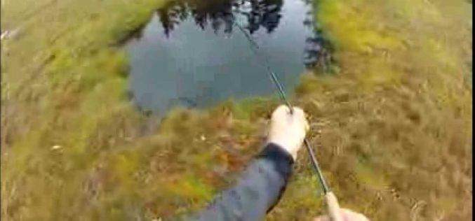 Kleiner Pool – großer Fisch