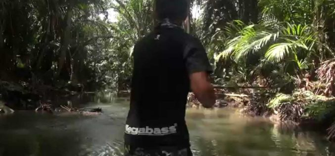 Papuan Black Bass Fishing I