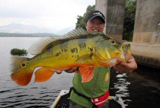 Kleine Köder – große Fische