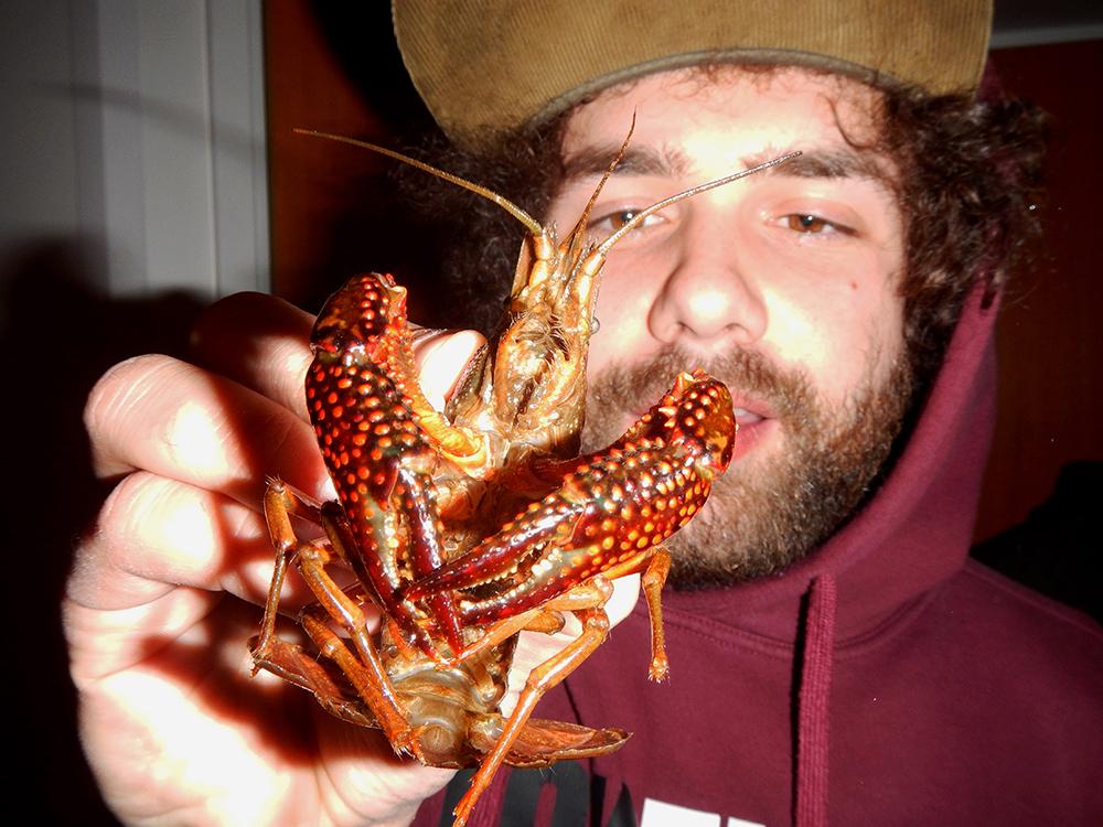 Procambarus Clarkii in seiner ganzen Pracht, kurz vor seiner Hinrichtung per Kochtopf