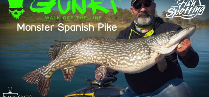 Monster Spanish Pike – Fish Spotting
