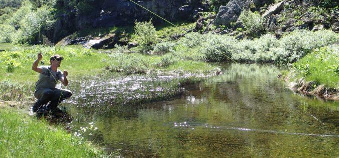 Alpines Fliegenfischen an Bergbächen