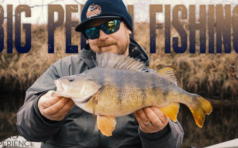 Big Perch Experience
