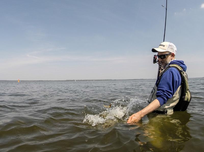 Johannes Dietel landet Fisch beim Spinnfischen mit der Wathose