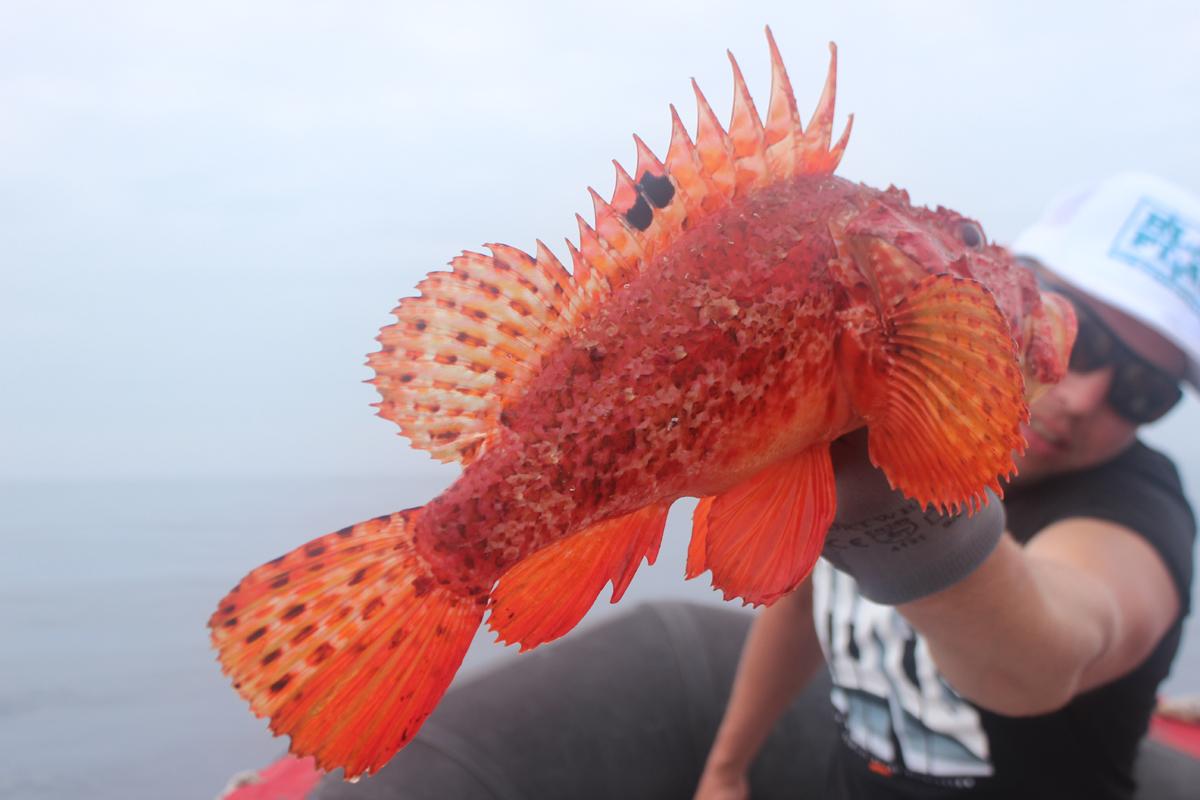 rotfisch