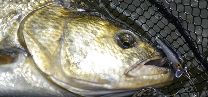 Ultralight-Spinnfischen III: Klassische UL-Disziplinen
