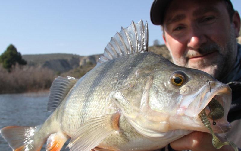 Das Texas-Rig: Mehr Fisch fangen und weniger Hänger
