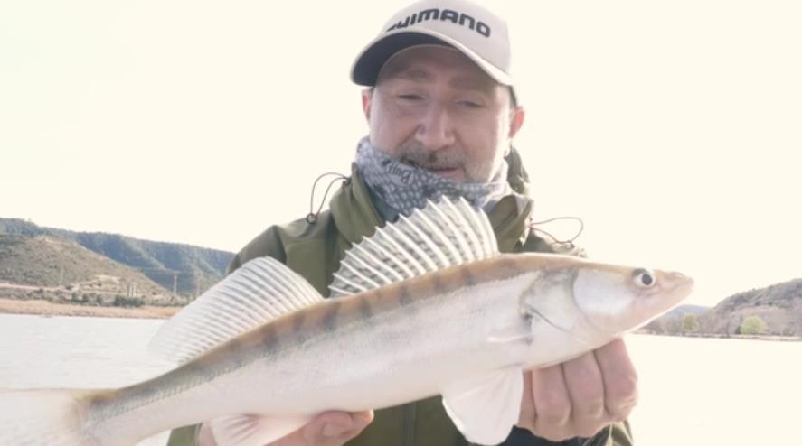 ertser-fisch