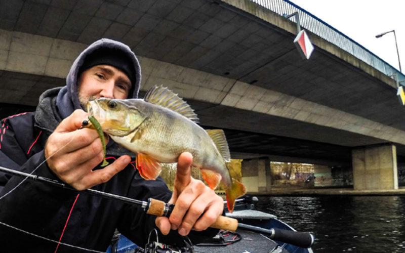 Wackeltechnik 2.0: Barschangeln an überfischten Spots