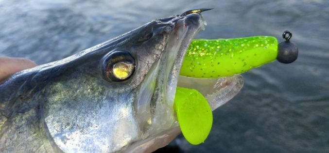 Die Besten für Zander – zwei Top-Jigs im Vergleich