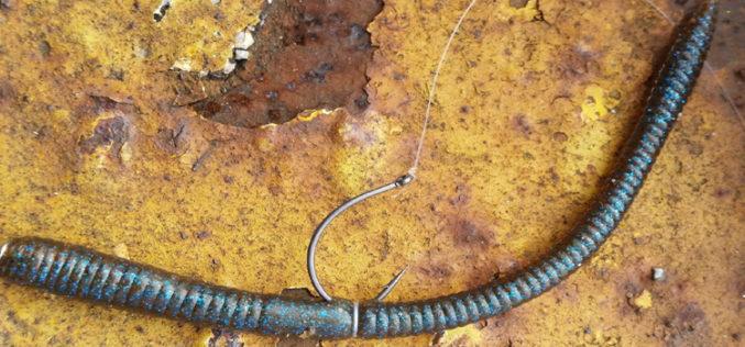 Neko-Rig: Alles hat ein Ende, nur der Wurm hat zwei!