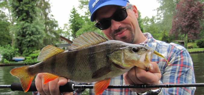 Barsch: Vom Beifang zum Trendfisch