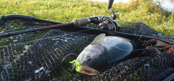 Trout Area: Ultralight Blinkern auf Forellen