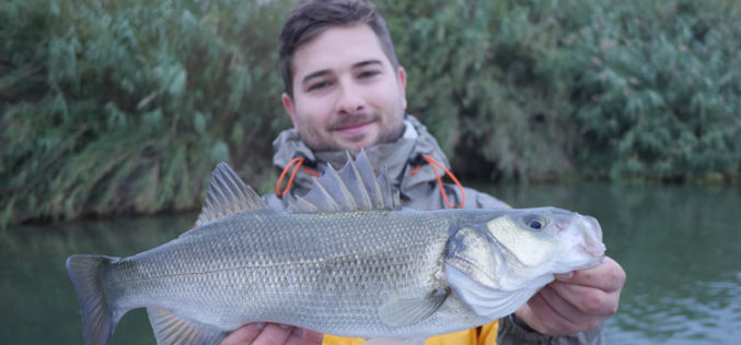 Wolfsbarsch: Flusswölfe vom Ebro-Delta