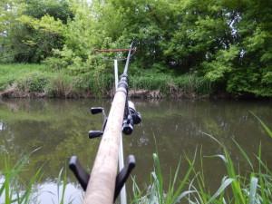 die erste Gibelsitzung, der Futterkorb liegt leicht rechts auf der anderen Flussseite vor dem Busch