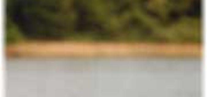 Zander-Montage für Anfänger: Schwimmjig am Seitenarm