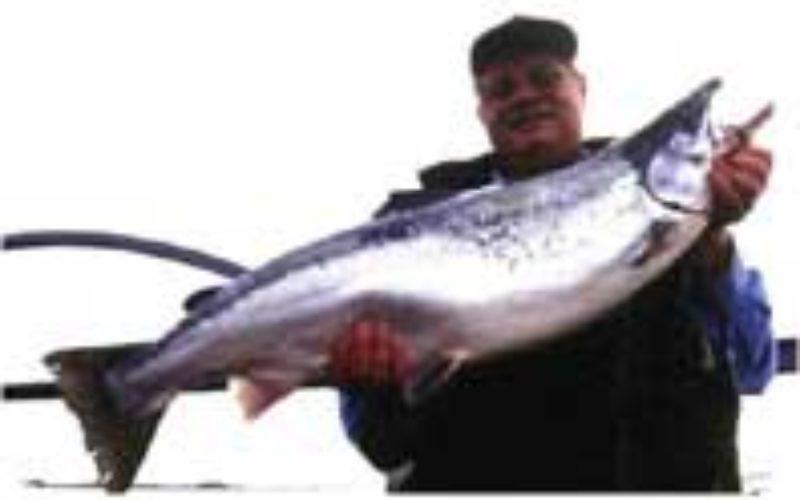 Fish-Expert-Blinker