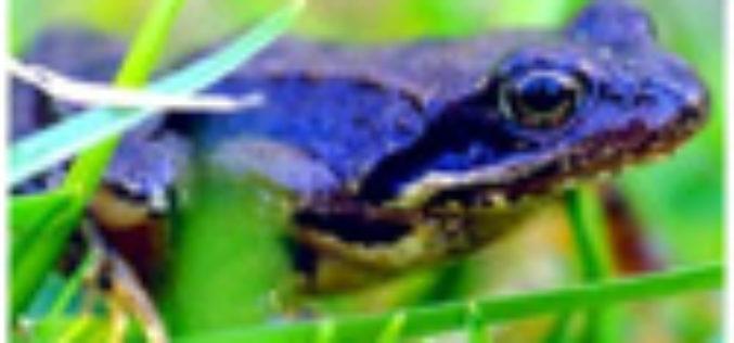 Im Mai ein Hit: Flachwasser-Froggern