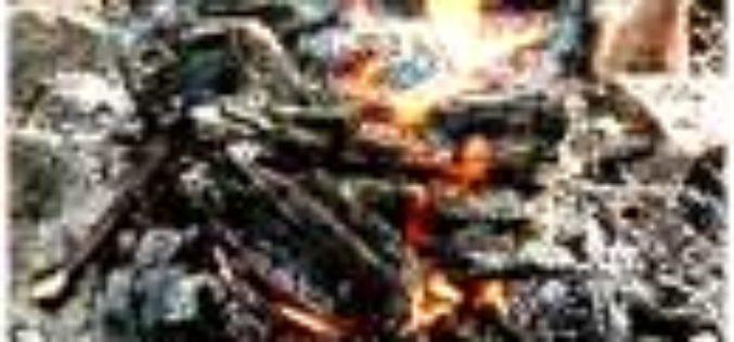 Rustikaler Barsch am Lagerfeuer im Tonmantel