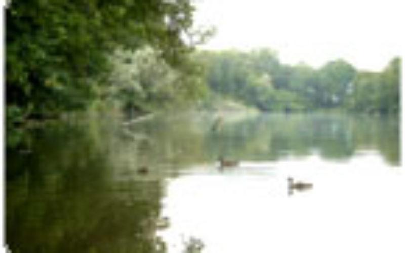 Aquat. Ökosysteme – Seen, Teil 3: Stoffkreisläufe und das Problem Eutrophier