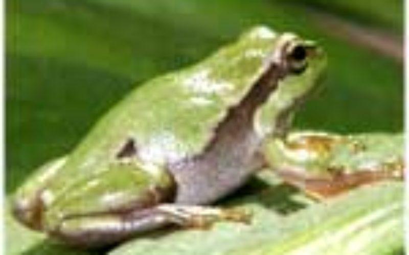 Frogger Dir nen Hecht!