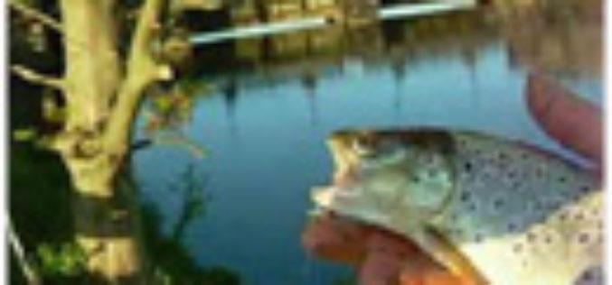 Forellenfischen an Flüssen
