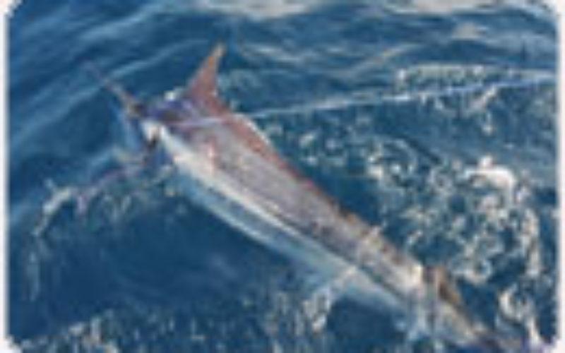 König des Ozeans – Black Marlin-Fischen in Kenya