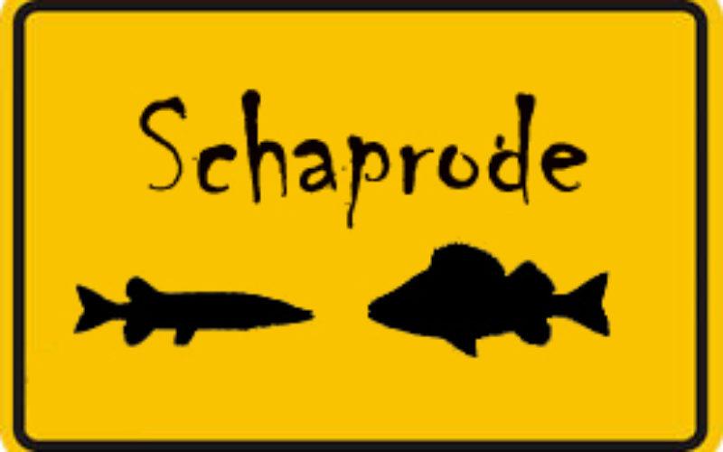 Schaprode intensiv: Ein voller Monat ganz dicht am Fisch